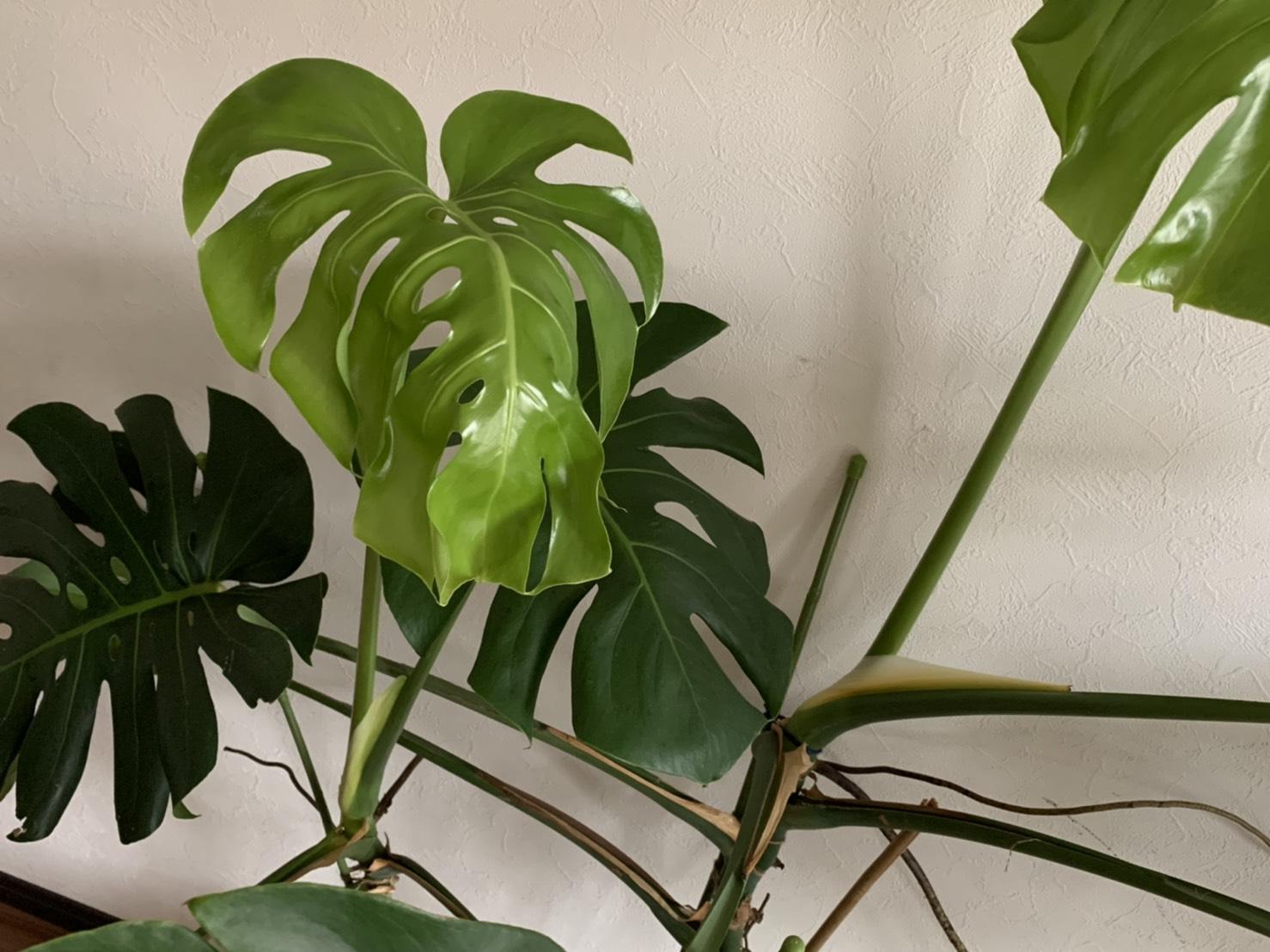 新しいみずみずしい葉